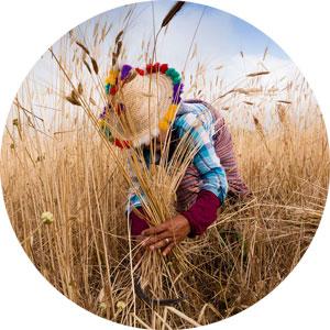 Dieta mediterranea: buona per la salute, buona per l'ambiente, buona per il clima