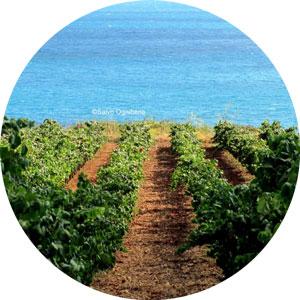 Doc Menfi, uno dei territori vinicoli più interessanti della Sicilia